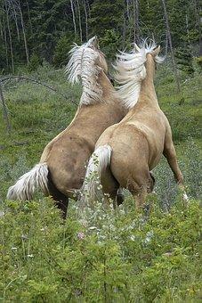 Horses, Mammal, Fighting, Animal, Wild, Wildlife