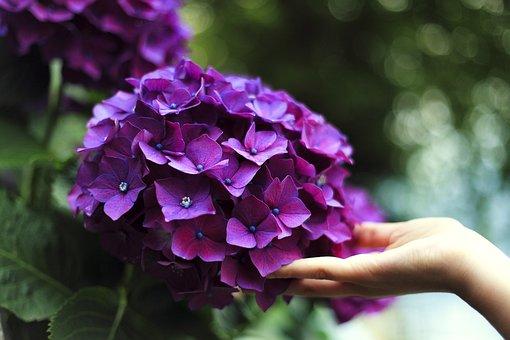 Bloom, Blossom, Close-up, Depth Of Field, Flora