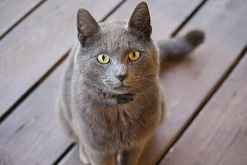 Cat, Garmin, Animal, Eyes, Downy, Fur, Tomcat, Pet