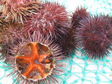 Sea Urchins, Seafood, Fang, Mediterranean, Egg