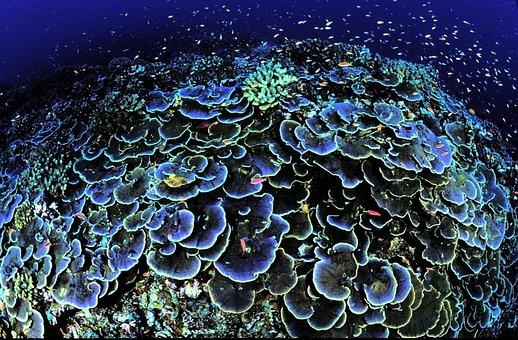 Coral, Core, Aequituberculata, Montipora, Swirls