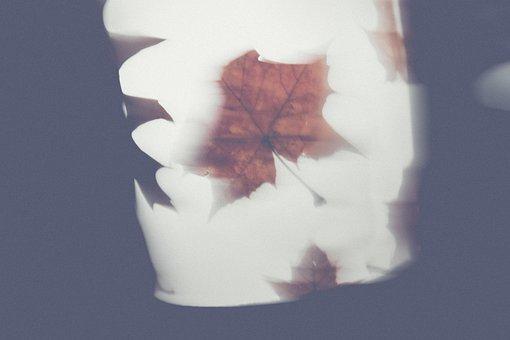 Autumn, Leaves, Martin, Move, Kindergarten, Lantern