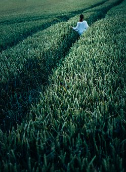 Agriculture, Cereal, Crop, Cropland, Environment, Farm