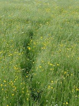 Meadow, Flower Meadow, Spring, Trace, Away, Path, Grass