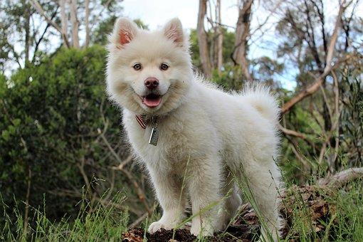 Happy, Dog, Animal, Pet, Canine, Cute, Puppy, Friend