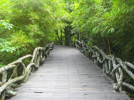 Yanoda, China, Park, Rainforest, Forest, Trees, Woods