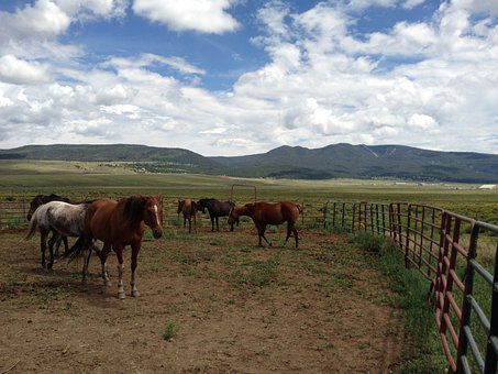 Horses, Countryside, Farm, Grazing, Pasture, Field
