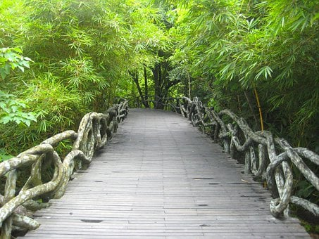 Yanoda, China, Park, Rainforest, Forest, Trees, Woods