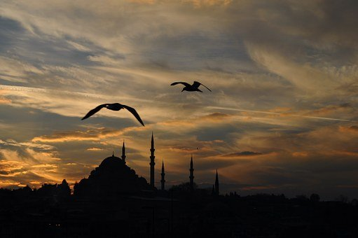 Turkey, Istanbul, Animal, Sunset, Clouds, Landscape