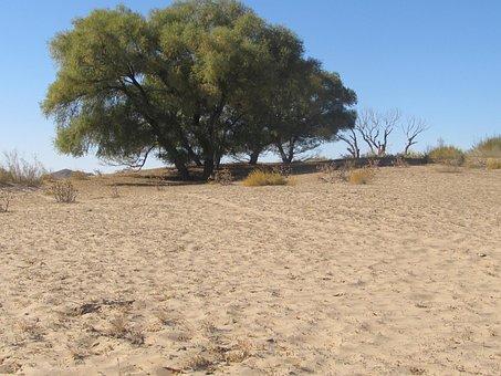 Tree In The Desert, Desert, The Scenery
