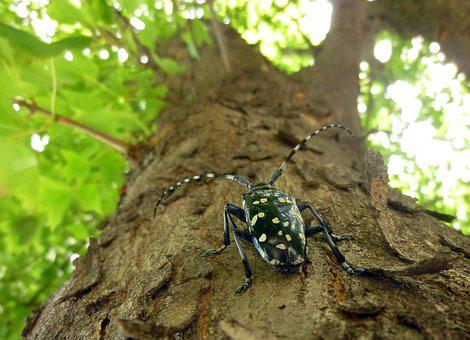 Alrak Long-horned Beetle, Insects, Wood, Summer, Feeler