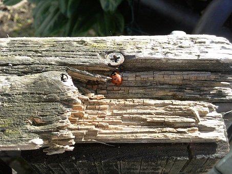 Tribe, Wood, Nature, Dry Wood, Morsch, Garden Gate