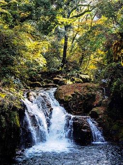 Japan, Kumamoto, Kikuchi, Valley, Autumn, Leaf