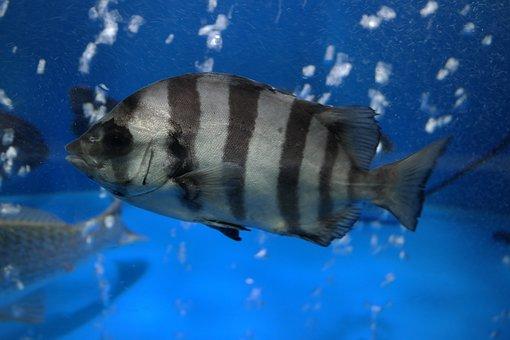 Fish, Line Dome