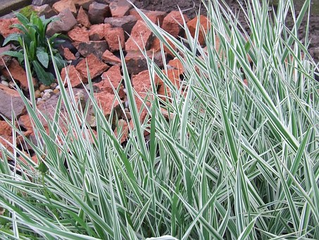Grass, Garden, Strips, Ornamental