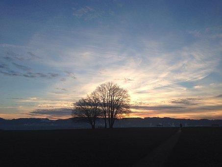 Tree, Sky, Sunset, Zollikon, Switzerland, Nature, Mood