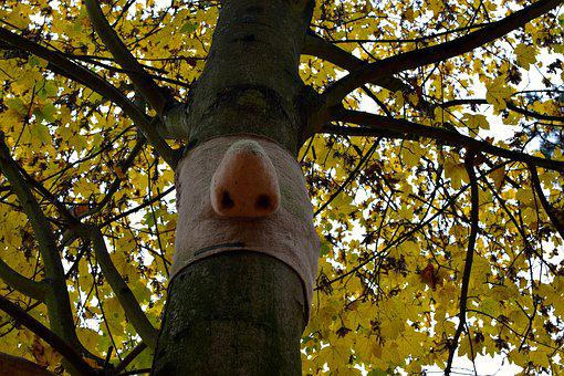Funny, Nose, Art, Maple, Tree, Autumn
