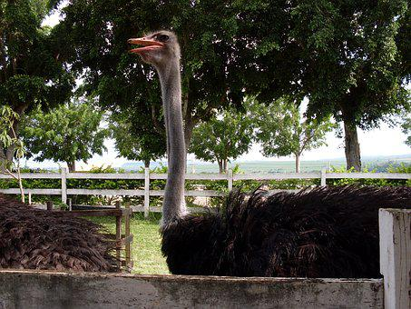 High Ostrich, Ostrich Trees, Ostrich Zoo