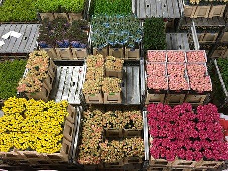 Flowers, Flower Auction, Holland, Netherlands