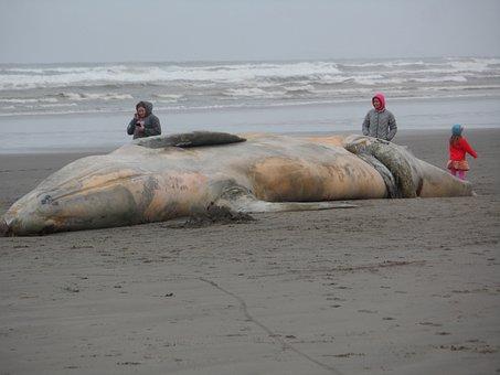 Beached Whale, Seaside, Ocean Life, Ocean, Sea Animal