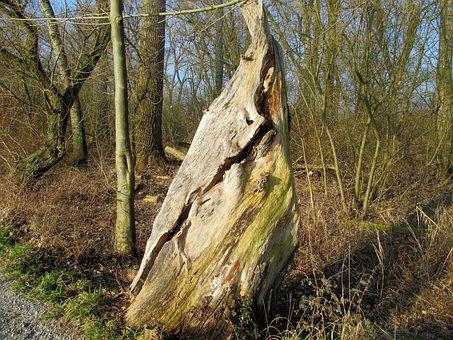 Nature, Tree, Tribe, Gnarled, Old, Strunk, Tree Stump