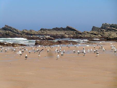 Beach, Amalia, Alentejo, Birds, Seagulls