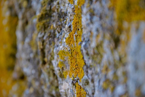 Photomicrography, Moss, Stone, Yellow