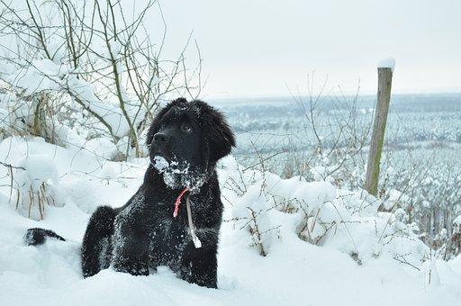 Dog, Winter, Animal, Czworonów, Spacer, Snow, Doggy