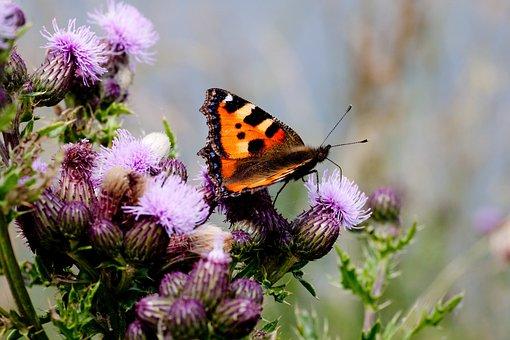 Flower, Butterflies, Fauna, Color, Nature