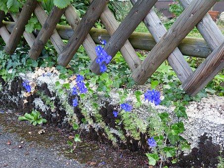 Fence, Garden Fence, Wayside, Wall, Fouling, Flower