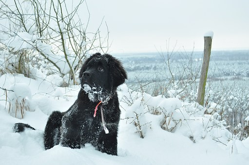 Dog, Winter, Animal, Czworonów, Spacer, Snow, Doggy