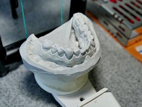 Dental Model, Pine, Tooth, Teeth