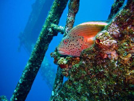 Diving, Underwater, Coral Guardian, Wreck, Water