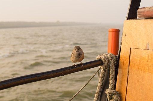 Sparrow, Sea, Boat, Line, Sitting, Bird, Animal