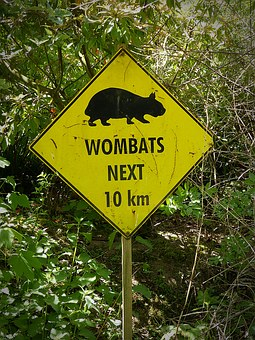 Wombats, Wombat, Shield, Note, Sign