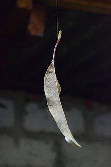Dry Leaf, Leaf On Web, Spider Web, Leaf, Float