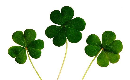 Clover, Shamrocks, Irish, Day, Luck, Green, Ireland