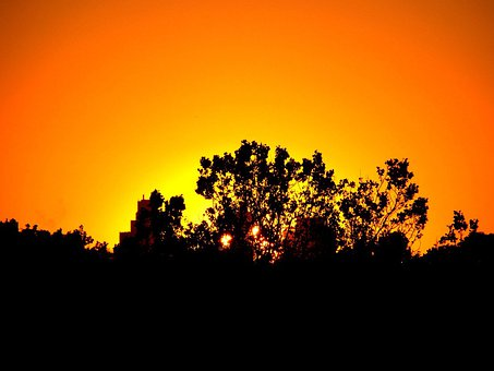 Sunset, Trees, Silhouette, Dusk, Evening, Sky, Orange