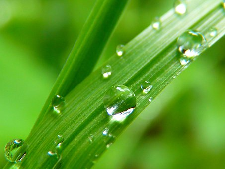 Drop Of Water, Drip, Close, Grass, Green, Nature