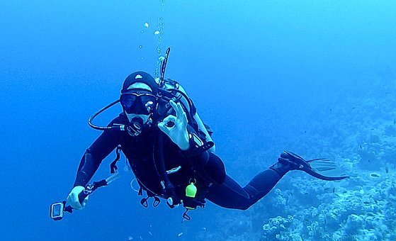 Diving, Underwater, Divers, Water, Underwater World