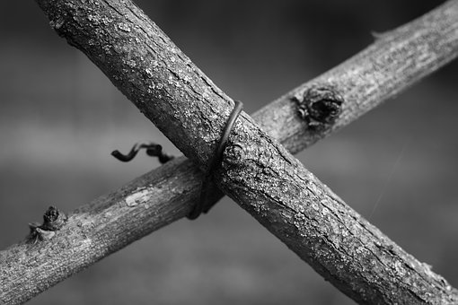 Branch, Branches, Wire, Cross, Black And White, Nature