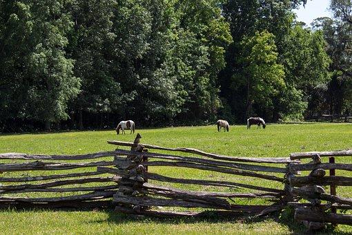 Pasture, Pony, Fence, Lattice, Horse, Animal, Farm