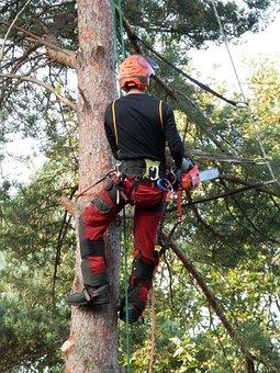 Tree Surgeon, Tree Logger, Lumberjack, Worker, Tree