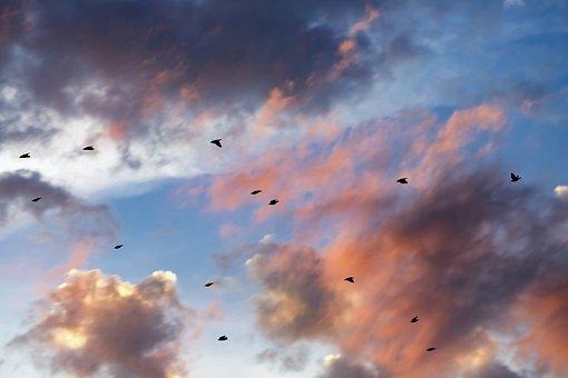 Sunset, Clouds, Cloudscape, Birds, Nature, Sunlight
