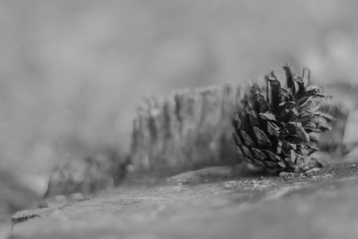 Stump, Wood, Nature, Forest, Cone, Beauty, Life