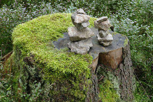 Log, Moss, Stones, Forest, Nature, Old, Tree, Fouling