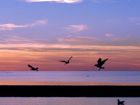 Seagulls, Sunset, Nature, Sea, Water, Sun, Sky, Bird