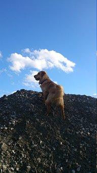 Golden Retriever, Male, Play, Animal, Dog, Sunny, Cloud