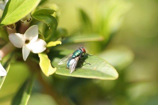 Fly, Nature, Plant, Green, Bottle, Close-up, Leaf