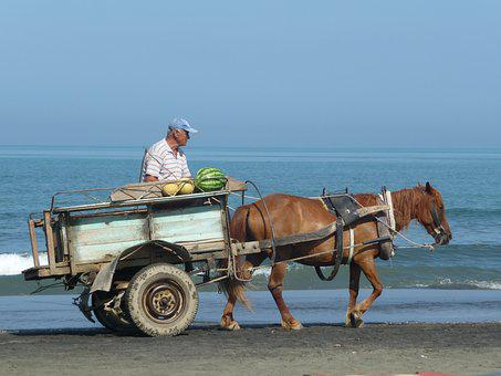 Beach, Seller, Wagon, Horse, Dare